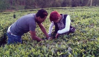 Photos Of Celebrity Couple Size 8 And Dj Mo Picking Tea Leaves Back In The Village
