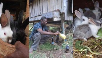 Market For Rabbit urine in Kenya