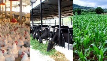 10 Most Lucrative Farming Ideas To Venture Into In Kenya