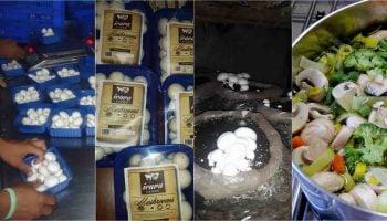 Where to Sell Mushroom in Kenya