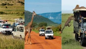 List of Best Travel Agencies and Tour Operators in Kenya