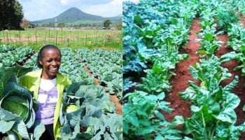 Most Profitable Vegetables to Grow in Kenya