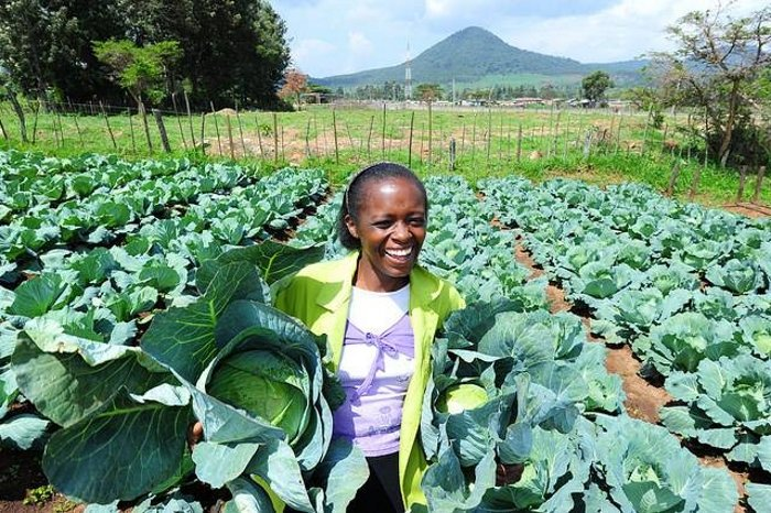 cabbage farming in zimbabwe pdf