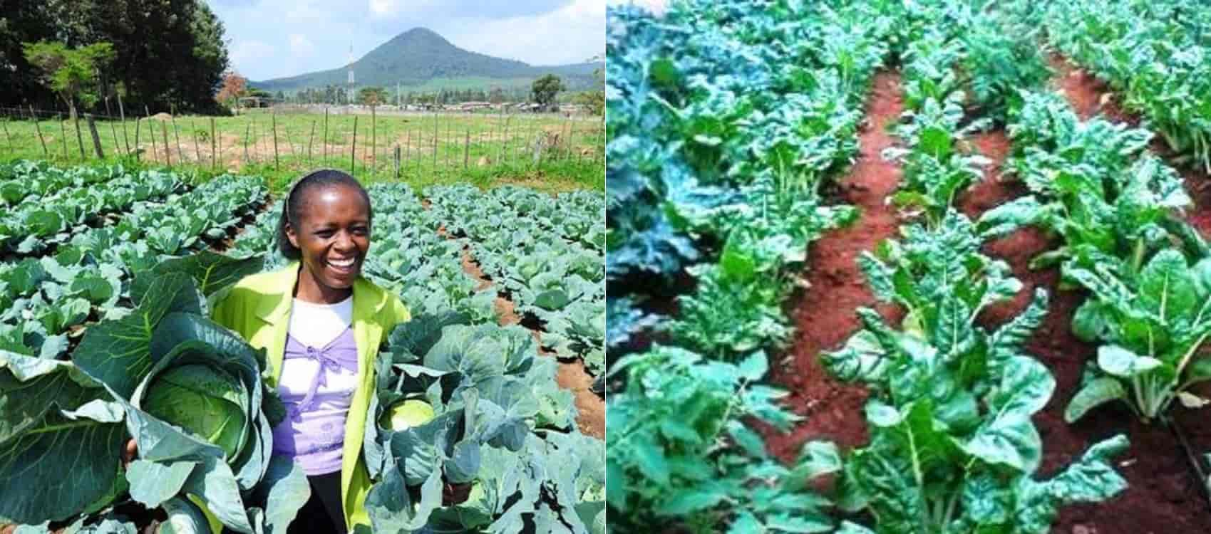 Image result for horticulture farming kenya