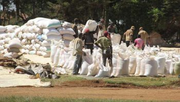 How to Start a Successful Maize Selling Business in Kenya