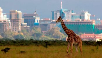 Top 6 Best Parks You Should Visit When in Kenya
