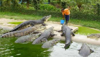 List Of Major Crocodile Farms In Kenya
