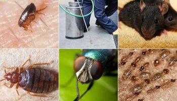 Top 10 Pest Control Companies In Kenya
