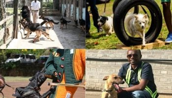 List Of The Best Dog Trainers In Kenya
