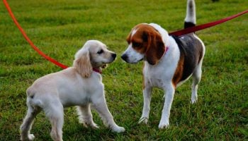 List Of The Best Online Pet Stores In Kenya
