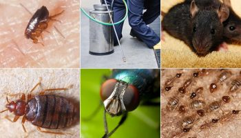 Top 10 Pest Control Companies In Kenya