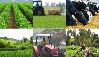 List Of All Agriculture Insurers in Kenya