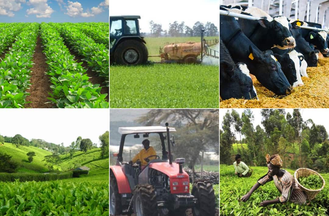 List Of All Agriculture Insurers in Kenya 2018
