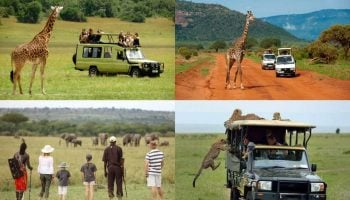 List Of Things To Pack For A Safari In Kenya