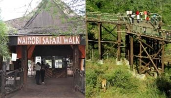 Nairobi Safari Walk Charges 2020