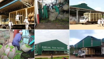 List Of All KTDA Factories Per Region In Kenya