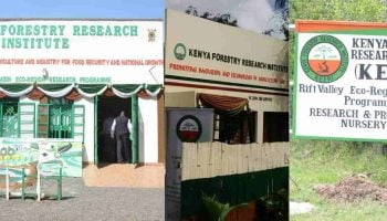 List Of KEFRI Research Programmes