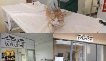 List Of Veterinary Clinics In Kenya