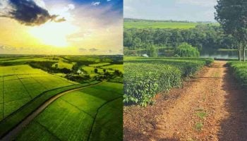 List Of 10 Best Places To Visit In Kericho County