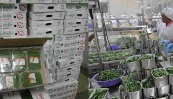 List of French Beans and Horticultural Exporters in Kenya