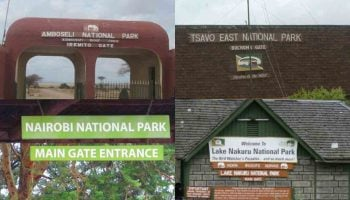 Kenya Wildlife Service Park Fees 2020
