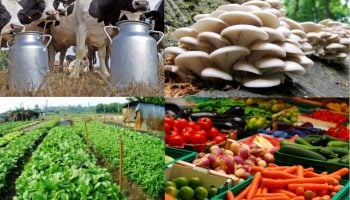 List Of The Best Agribusiness Ventures In Kenya