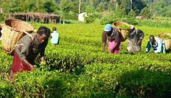 How To Apply For Agri-biz Loan From Youth Enterprise Fund