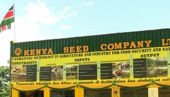 List Of Top Seed Companies In Kenya