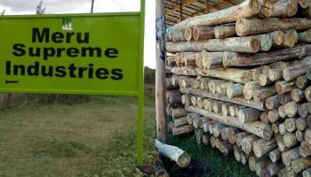 List Of Wood Treatment Plants In Kenya