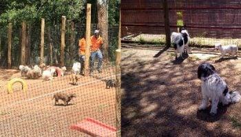 List Of Best Pet Grooming Companies In Kenya