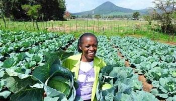 List Of Profitable Agribusiness Ideas In Kenya 2021