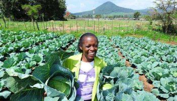 List Of Profitable Agribusiness Ideas In Kenya