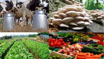 List Of Best Agribusiness Consultants In Kenya