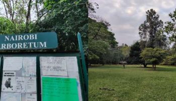 The Nairobi Arboretum Entry Fees