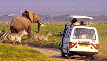 Best Time For A Safari In Kenya