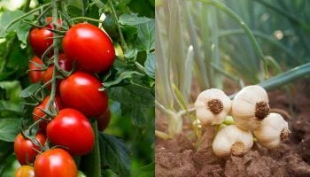 List Of Most Profitable Horticultural Crops In Kenya