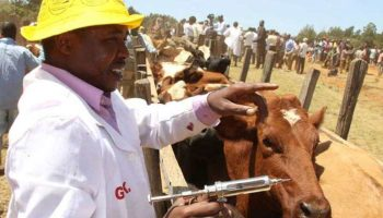 Registration Fees For Veterinary Professionals In Kenya
