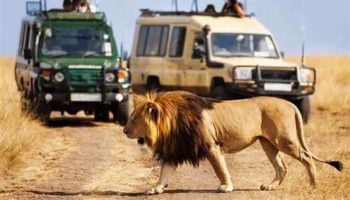 The 5 Best Places for a Safari from Nairobi