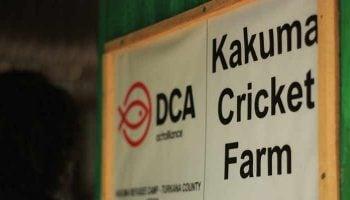 Cricket Farming In Kenya