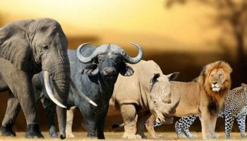 Facts About The Big Five Animals In Kenya
