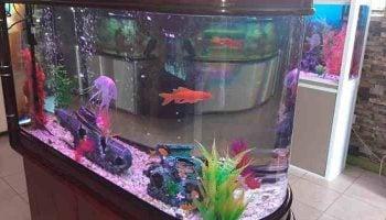 List Of Best Aquarium Shops In Nairobi