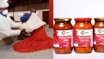 List Of Chilli Processing Companies In Kenya