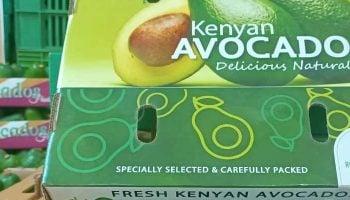 List Of Top Avocado Exporters In Kenya
