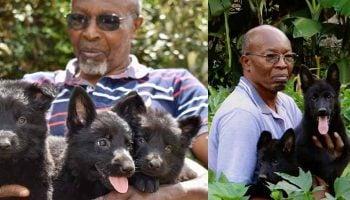 List Of Best Dog Breeders In Kenya